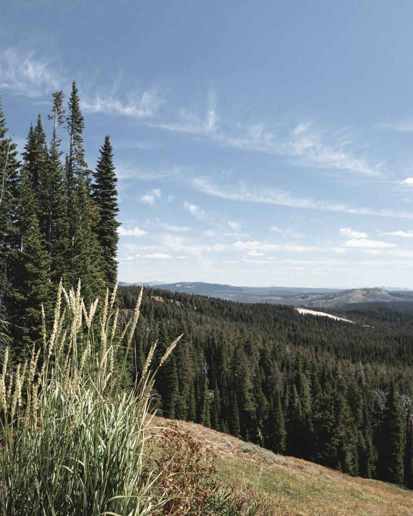 Yellowstone-9323