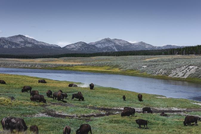 Yellowstone-9396