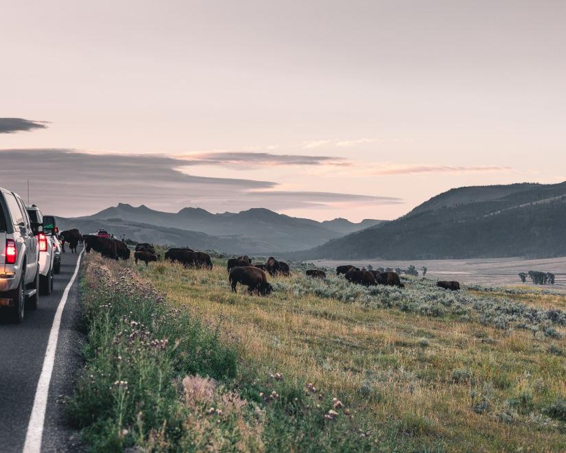 Yellowstone-9621